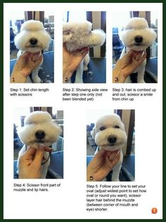 Dog Grooming Tools, Dog Grooming Styles, Dog Grooming Shop, Creative Grooming, Dog Grooming Salons, Poodle Grooming, Dog Grooming Business, Cortes Poodle, Poodles