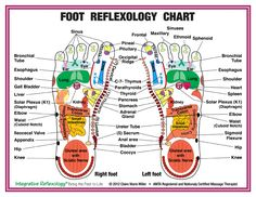 foot message thearpy chart | 5x11 Foot Chart | Claire Marie Miller Seminars