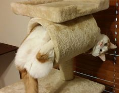 13 Cats Who Can't Believe You're Taking A Picture Instead Of Helping