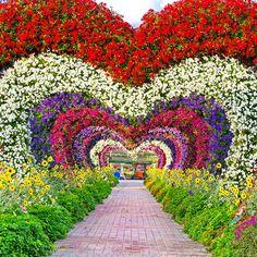 Season for Dubai Miracle Garden Beautiful Landscape Wallpaper, Beautiful Flowers Wallpapers, Beautiful Flowers Garden, Beautiful Roses, Beautiful Landscapes, Dubai Garden, Miracle Garden, Love Background Images, Beautiful Photos Of Nature