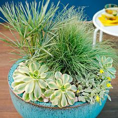 Cool hues - Cool Container Gardens - Sunset