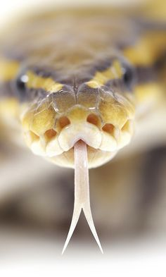 480x800 Wallpaper snake, tongue, spots, poison