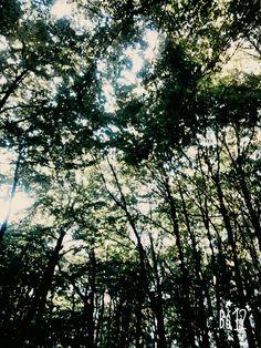 #las#drzewa