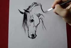Horse head - how to draw by Tora - Video Lessons of Drawing & Painting