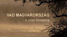 Vad Magyarország / Wild Hungary Archive Video, Rare Species, Budapest Hungary, Nature Animals, Natural Wonders, Amazing Nature, 2 In, Habitats, Wildlife