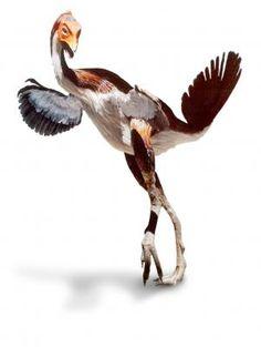 caudipteryx | Caudipteryx