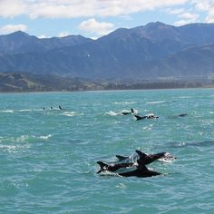 There's always something that makes each country beautiful. Here's some of the natural beauty of New Zealand #