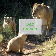 Private Games, Welcome Drink, Port Elizabeth, Game Reserve, Safari, Wildlife, African, Day, Animals
