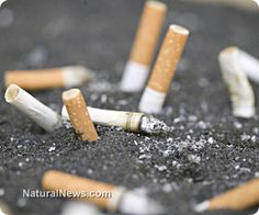 If you think the timing is wrong for quitting cigarettes, you are wrong - Now is the time!(NaturalNews) I bet you didn't know that nicotine in commercial cigarettes is up to 35 times stronger than it was in the 1950's and early 1960's, before Big Tobacco (Marlboro and Kool) started using ammonia to free-base it. That is the number one reason why 95% of smokers who try to quit without help will return to smoking within 6 months