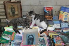 A street bookseller... Cats always are welcomed in Turkey. :)