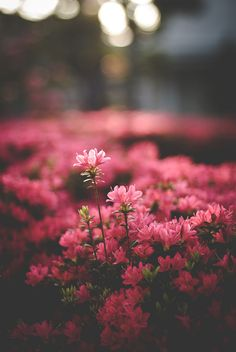 Untitled by Nozomu F. Wallpaper Nature Flowers, Flower Background Wallpaper, Beautiful Flowers Wallpapers, Beautiful Nature Wallpaper, Flower Backgrounds, Pretty Wallpapers, Flowers Nature, Beautiful Landscapes, Flor Iphone Wallpaper