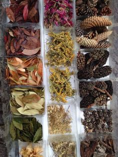 Science and Nature. What a lovely sorting activity! Natural loose parts - ReMida Bologna Terre d'Acqua ≈≈ Play Based Learning, Learning Through Play, Early Learning, Reggio Emilia, Reggio Classroom, Outdoor Classroom, Reggio Inspired Classrooms, Bologna, Reggio Children