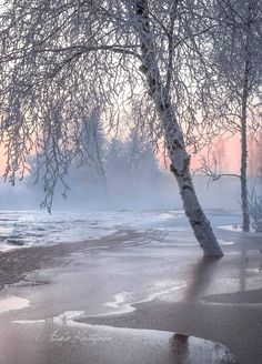 By Asko Kuittinen Winter Love, Winter Snow, Winter White, Snow Scenes, Winter Scenes, Winter Magic, Winter Fairy, Snow Covered Trees, Winter Pictures