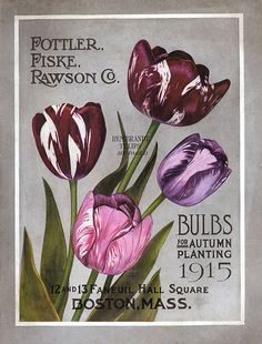 Vintage Fottler - Fiske - Rawson Co - Bulbs for Autumn Planting Catalogue - 1915