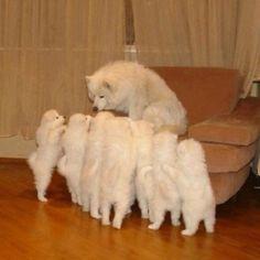 Puppies:)