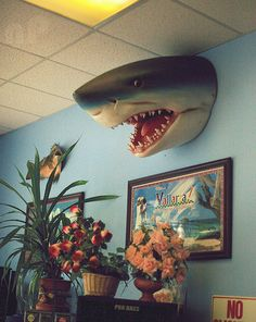 Shark head, awesome. i want it! Oh good a birthday idea!