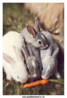 AWWWWWWWWWW Sooo cuteeee!! AHH I miss my old bunny! RIP Thumper <3