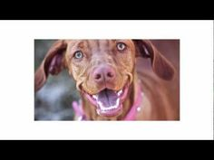 Dog Body Language - What your dog is desperately trying to tell you. Watch this all the way to the end, very important resource to understand your dog better Dog Training Videos, Best Dog Training, Dog Body Language, Crazy Dog Lady, Dog Safety, Dog Behavior, Cute Gif, Beautiful Dogs, Animal Shelter