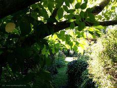 Hammfiction: Herbst zieht in den Sommergarten