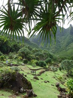 The Limahuli Garden's ancient history, deep cultural links, and heroic gardening practices make it unique among Hawaiian gardens.