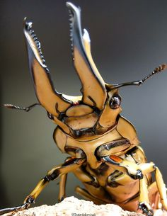 Pictures Of Insects, Insect Photos, Cool Insects, Bugs And Insects, Weird Insects, Beetle Insect, Insect Art, Beautiful Creatures, Animals Beautiful