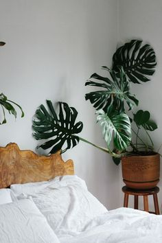 natural wood headboard and plant accent in a minimal bedroom