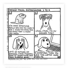 Pin auf Cockapoo / Doodle Dog Mummy News & Tips