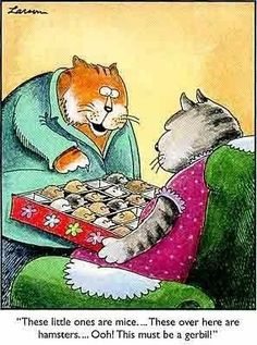 Who remembers these comics? Millions of people all over the world were fans of The Far Side! The Far Side was a single-panel comic created by Gary Larson Far Side Cartoons, Far Side Comics, Funny Cartoons, Funny Comics, Funny Cats, Gary Larson Far Side, Gary Larson Cartoons, Cat Jokes, Cat Comics