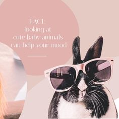 Did you know it's a proven fact looking at cute baby animals can help your mood? Even help you concentrate?!! 🐰 Cute Baby Animals, Did You Know, Cute Babies, Muse, Puzzle, Movie Posters, Instagram, Art, Art Background