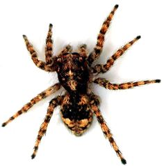 I love spiders. One of God's most delicate and interesting creatures.