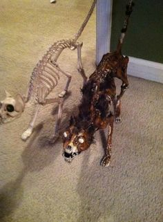 Idea pic - corpse your cat skeleton