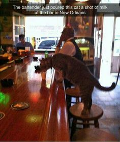 This bartender just poured this cat a shot of milk at the bar in New Orleans! :)