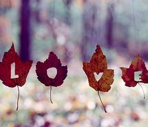 LOVE the fall time