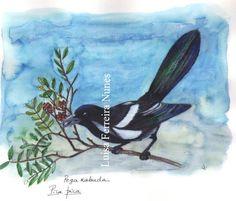 Pega Rabuda - Diário da Natureza 2014!...
