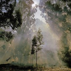 diesel-dust-abstracts_fire-in-eucalyptus-trees-bergville-south-africa by Obie Oberholzer Eucalyptus Tree, Natural Wonders, Dream Vacations, South Africa, Diesel, Northern Lights, Display Wall, African, Abstract