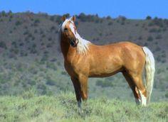 The Liberty Stallion....Nev. Mustang
