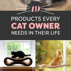 19%20Incredible%20Products%20Every%20Cat%20Owner%20Needs%2C%20Like%2C%20Yesterday
