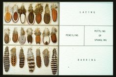 Feather patterning