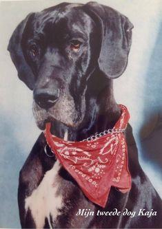 Op het moment dat haar geliefde hond Kaja stierf? Zaten alle katten om de hond heen Decoupage, Pitbulls, In This Moment, Dogs, Animals, Animales, Pit Bulls, Animaux, Pet Dogs