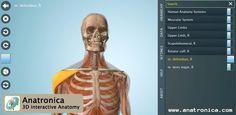 Anatomy 3D - Anatronica. aplicación para aprender la anatomía del cuerpo humano. Esta guía educativa en 3D ofrece en su versión gratuita el sistema locomotor (músculos y huesos)