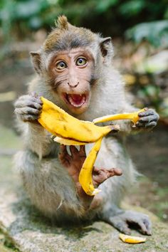 Banana time!!! © CameronZegers