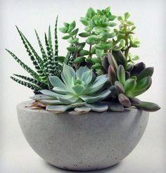 O vaso de cimento queimado destaca as majestosas suculentas.
