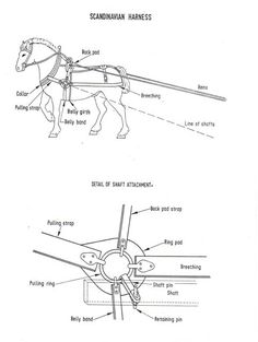 team horse harness parts harness parts explained with graphics rh pinterest com