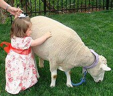 visit a petting zoo