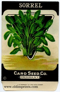 Vintage sorrel seed