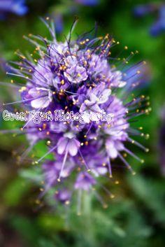Purple flower Guen Egan Photography