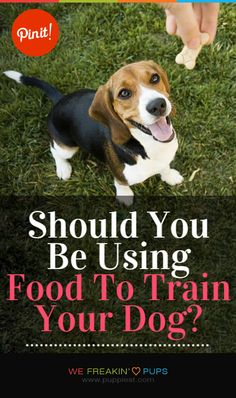 Should You Be Using Food To Train Your Dog?   #puppies #puppy #pup #dogs #dog #pets #pet #tips #tip #tricks #trick #teach #training #howto #how #ideas #animal