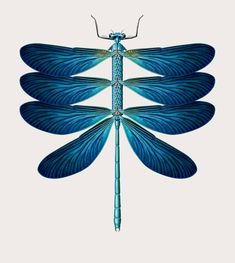 Vintage-Style Illustrations Merge Animals, Insects, and Botanics to Form Bizarre Hybrid Creatures | Colossal