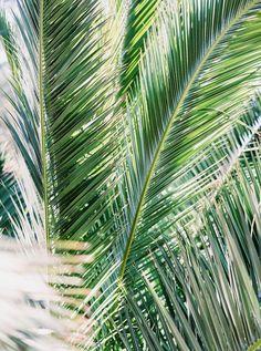 He's Beautiful, Beautiful Beaches, Ibiza Holidays, Ibiza Island, Ibiza Spain, Best Hotels, Plant Leaves, Sunset, Palms