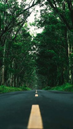 Tunnel of Trees photo by Frankie Sutera ( on Unsplash Dslr Background Images, Studio Background Images, View Wallpaper, Nature Wallpaper, Beautiful Roads, Beautiful Landscapes, Nature Pictures, Cool Pictures, Landscape Photography